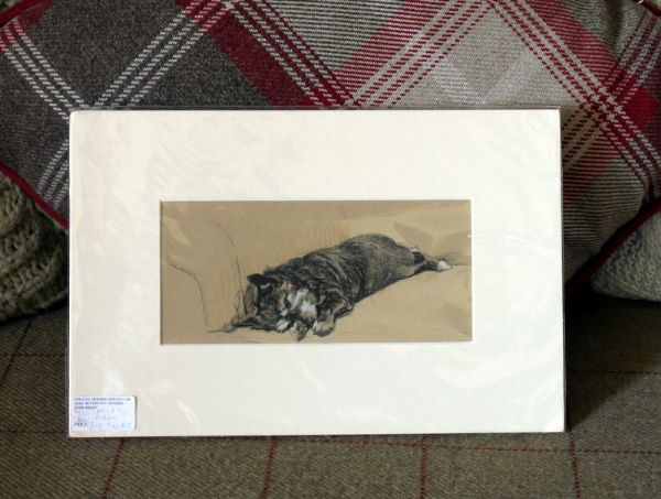 Dark Terrier lying on sofa - Ter A5- 1930's print by Cecil Aldin
